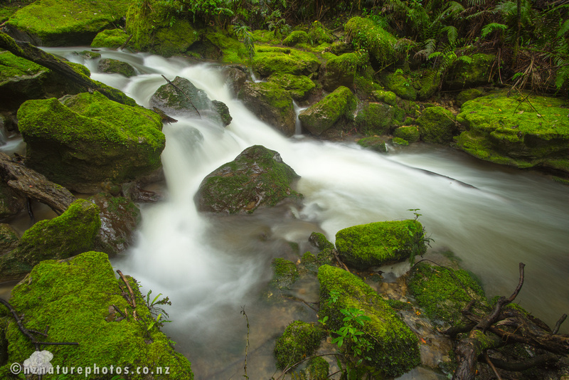Mossy Stream at Tangoio Reserve